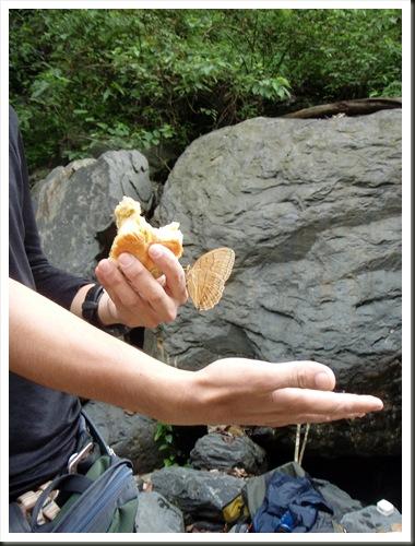 吃中餐,連蝴蝶都來報到